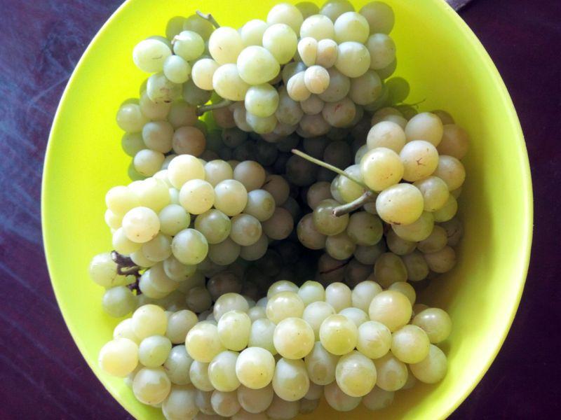 Comment tailler une vigne en pot page 9 au jardin forum de jardinage - Comment tailler une treille de raisin ...